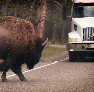 Crossing  from Yellowstone a couple years ago