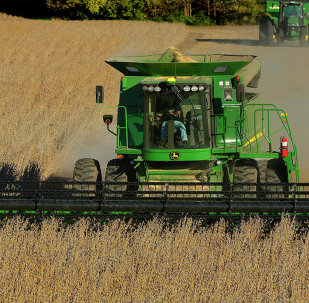 With grain prices falling - and farm profits along with them - some farmers are moving away from genetically modified crops to more lucrative conventional ones.