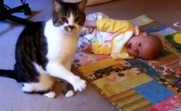 Watch a cat babysitter in action.