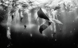 I believe in pure and limitless creative power and try to avoid all stereotypes regarding what I do with my camera and with the photographs I create. The first place winner of the National Geographic Traveler Photo Contest 2015, the photograph shows divers with a humpback whale and her newborn calf while they cruise around Roca Partida in the Revillagigedo [Islands], Mexico.