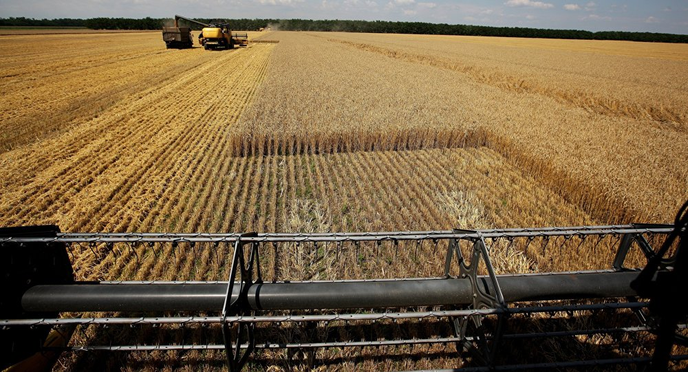 Harvesting wheat at the fields of the Lebyage-Chepiginskoe JSC in Timashevsky District, Krasnodar Territory