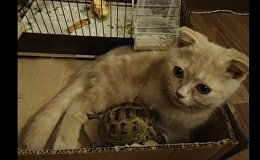 Cat and turtle share unlikely friendship