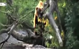 Russian bear goes fishing