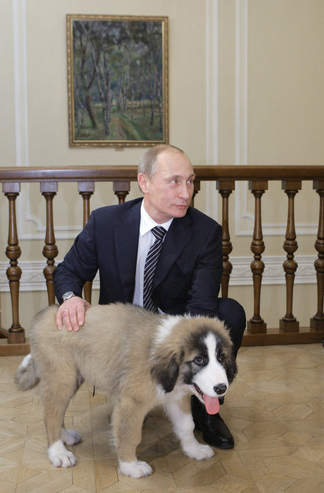 Putin's puppy gets a name