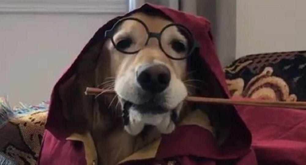 Dog-magician