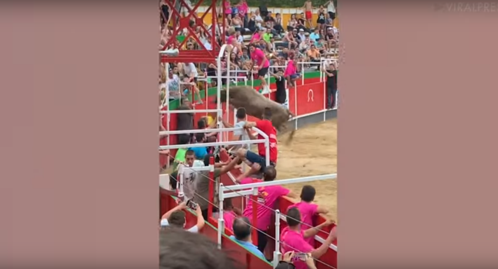 Massive Bull Causes Mayhem After Jumping Into Crowds