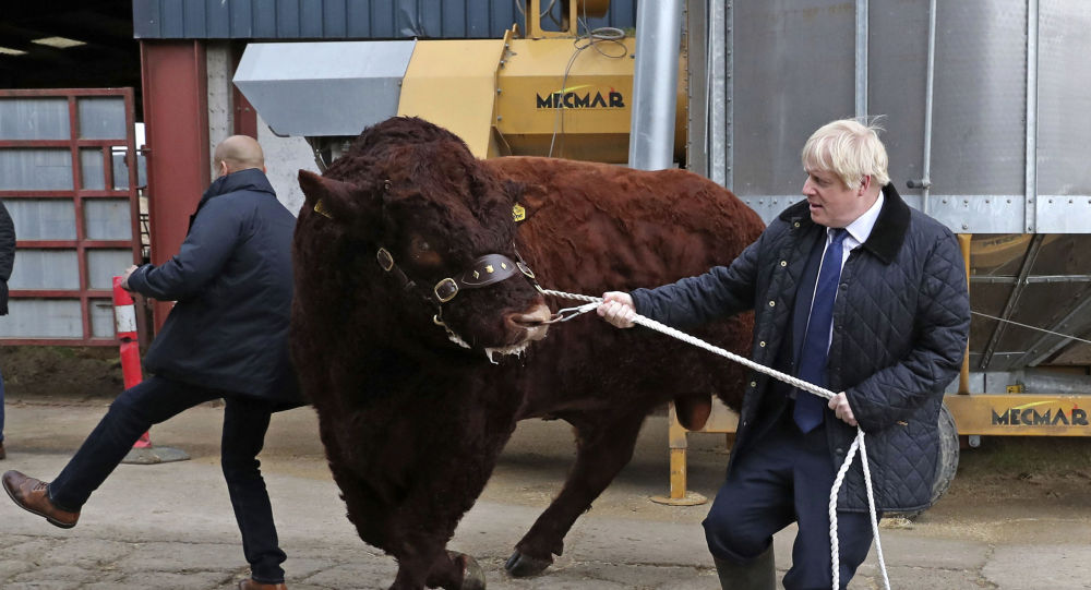 A bull bumps into a plain clothes police officer, left, while being walked by Britain's Prime Minister Boris Johnson during a visit to Darnford Farm in Banchory near Aberdeen, Scotland, Friday Sept. 6, 2019, to coincide with the publication of Lord Bew's review and an announcement of extra funding for Scottish farmers.