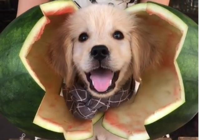 Watermelon&puppy