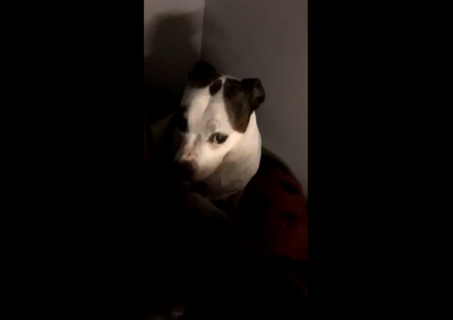 Trash-Digging Pup Pleads the Fifth After Getting Caught