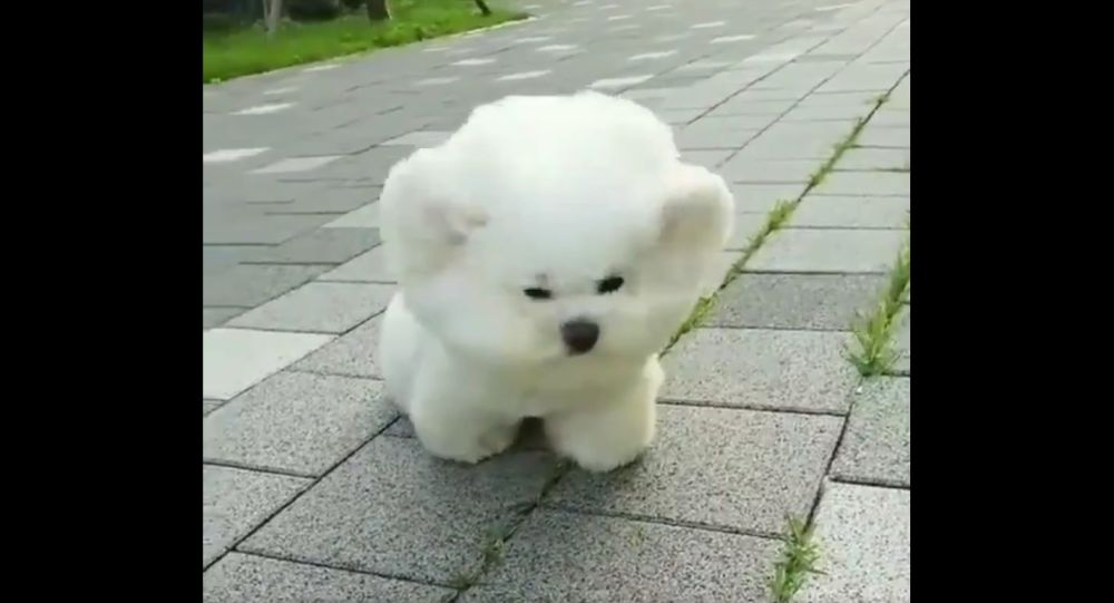 Can a puppy beat the wind ??