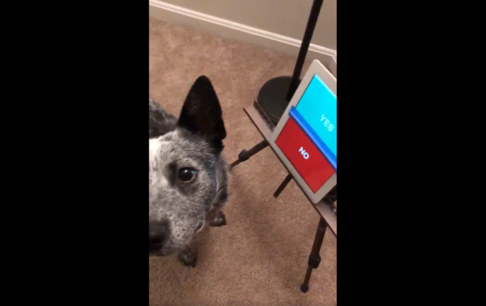 'You Have a Voice': Training Service Dog Uses App to Say Yes, No
