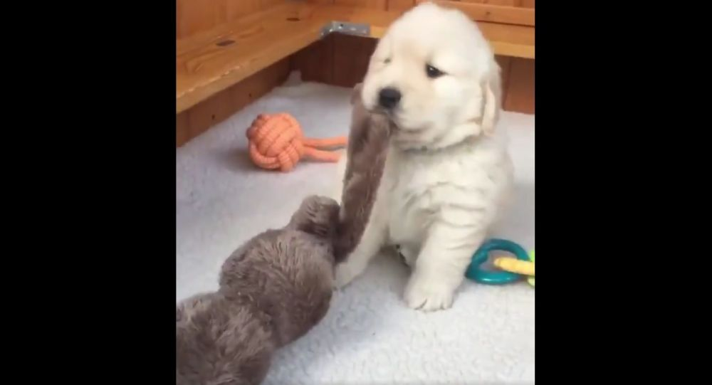 Karate pup!