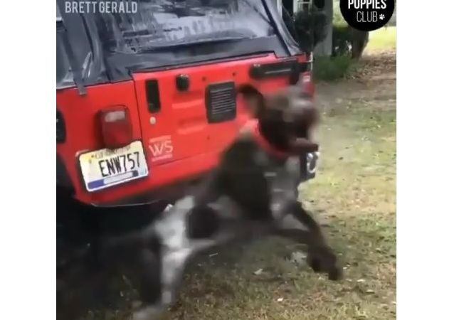 Levitating dog preventing the owner from washing his car