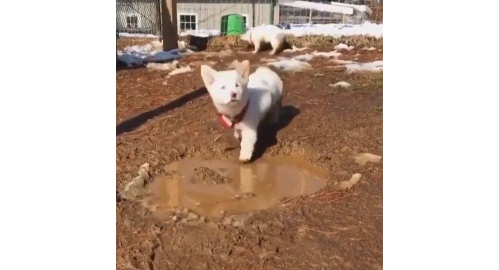 Puppy Falls Into Ditch