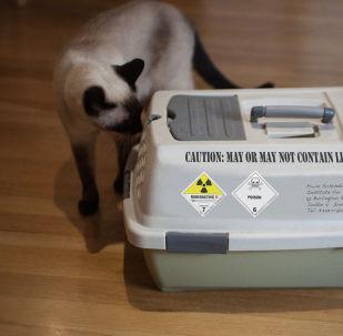 Schrödinger's cat carrier