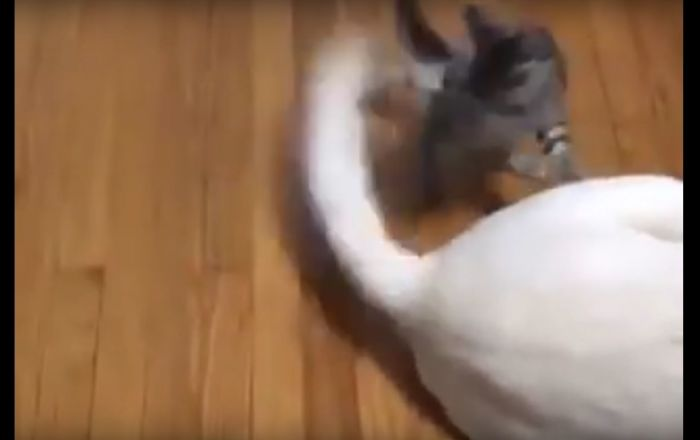 Cat Playing With Dog Tail