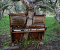 The Old Piano Tree