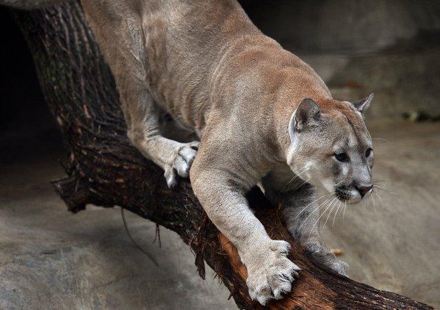 Moscow Zoo Celebrates 150 Anniversary