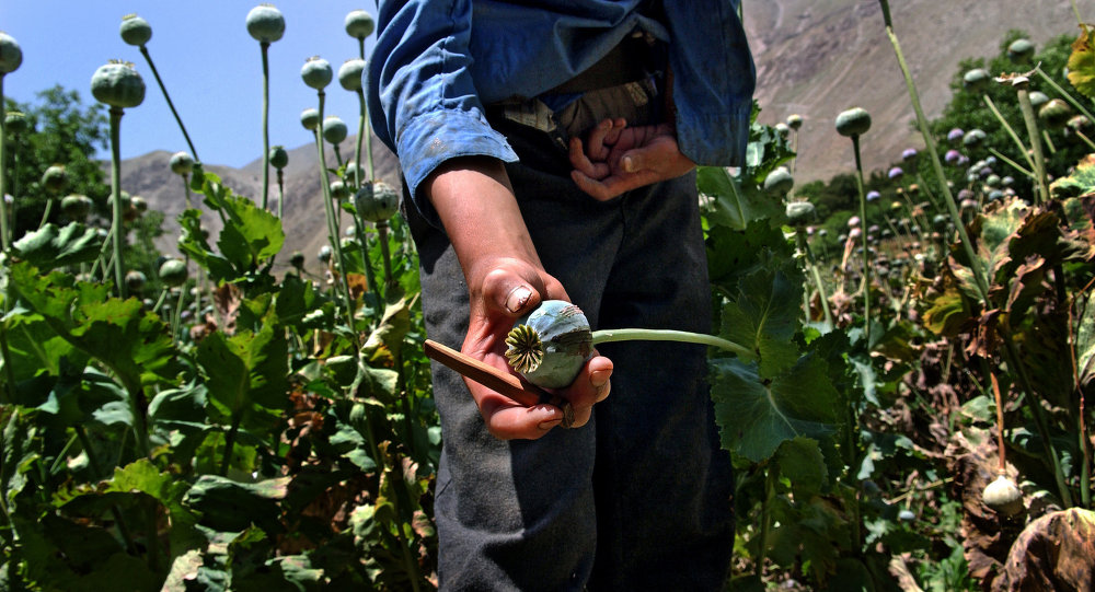 NATO mission fails to cripple opium trade in Afghanistan: expert