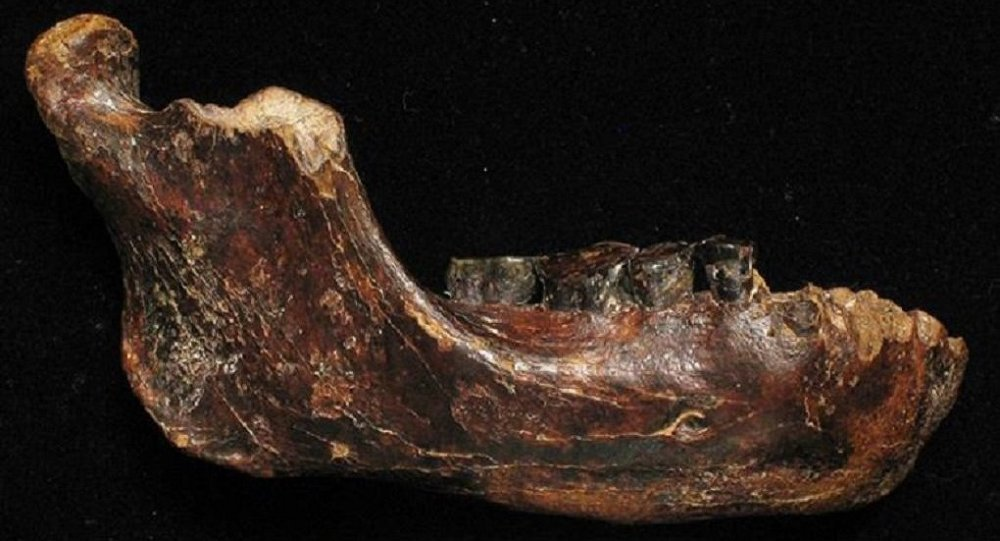 Rewriting History: 7.2-Million-Year-Old Remains Put Mankind's Origins Into Question
