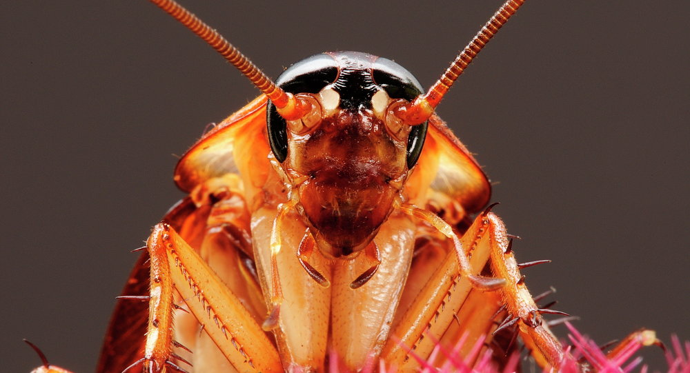 It might not be enough to keep us all from crunching them underfoot, setting traps or calling pest control, but scientists have discovered that cockroaches have personality.