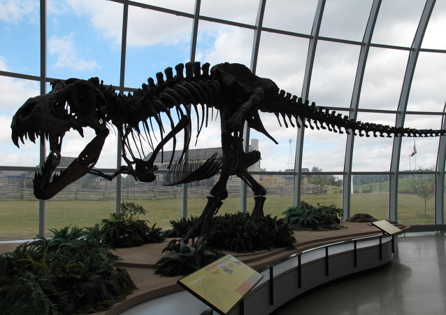 The skeleton of a dinosaur at Discovery Park of America in Union City, Tennessee.
