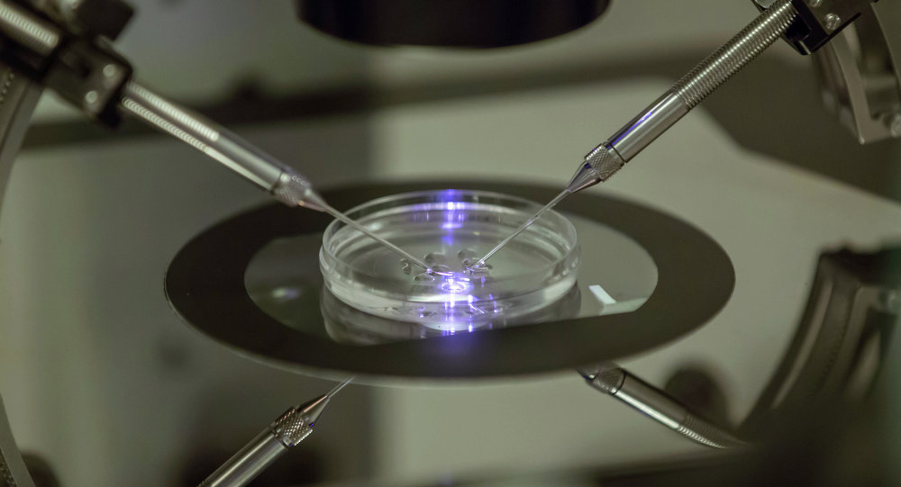 A petri dish at a fertility clinic in London