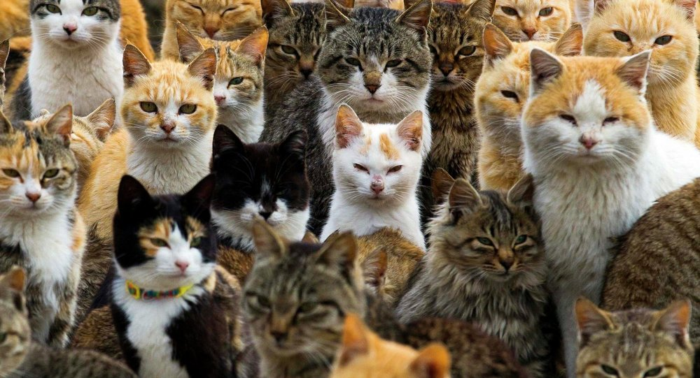 Cats crowd the harbour on Aoshima Island in the Ehime prefecture in southern Japan February 25, 2015