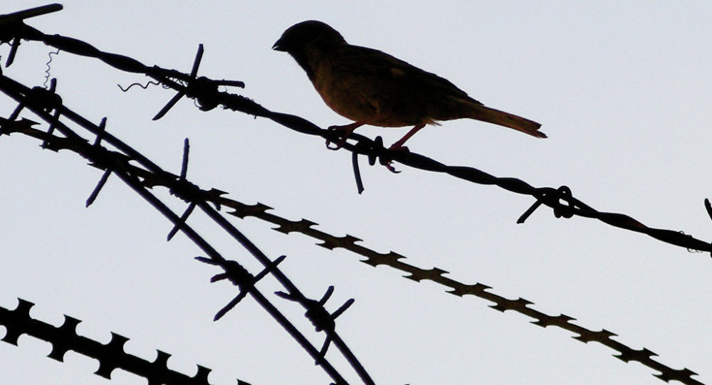 Barbed wire bird