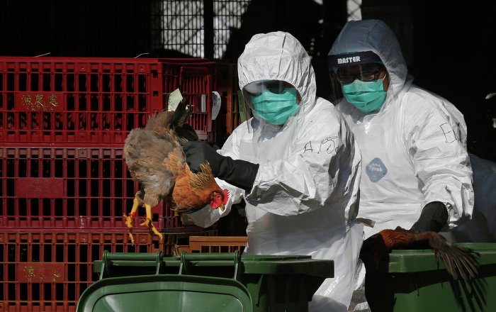 Two Cases of H7N9 Bird Flu Registered in China's North-East