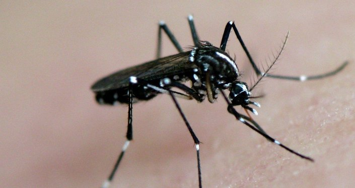 A mosquito and its prey...you! (No, but it's an Asian Tiger Mosquito)