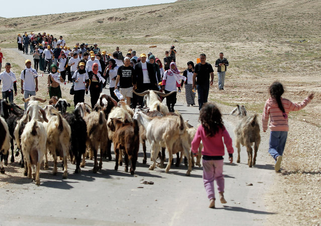 Bedouin children and their herd of goats walk toward protesters during a four-day march to Jerusalem