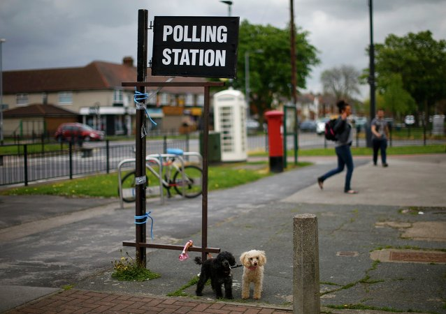 Dogs wait for their owner as he casts his vote at a polling station in a hairdressers during the election in Hull, Britain May 7, 2015