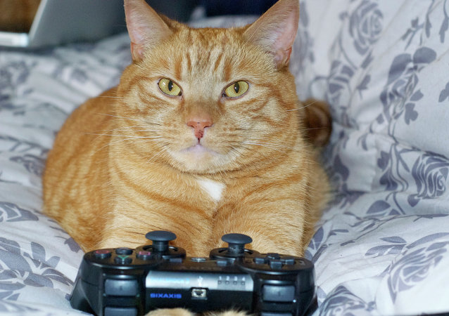 Cat and playstation