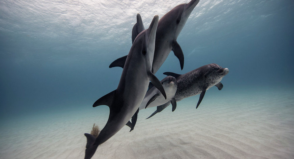 Loud fish orgies could make dolphins deaf, scientists say