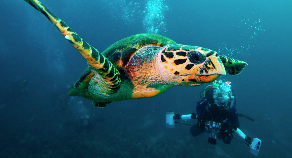 Mexico creates large marine reserve in the Pacific