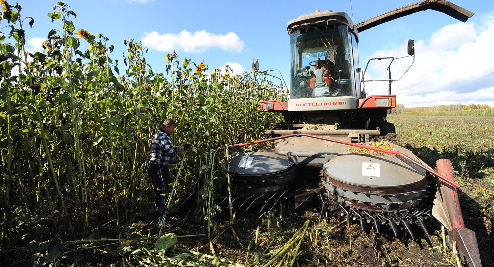 Sunflower harvesting in Chelyabinsk Region