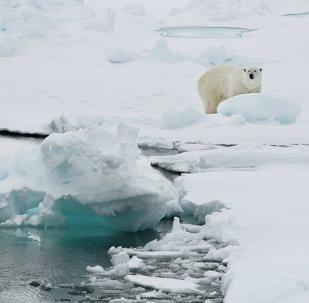 A polar bear stands on an ice floe near the Norwegian archipelago of Svalbard. File photo