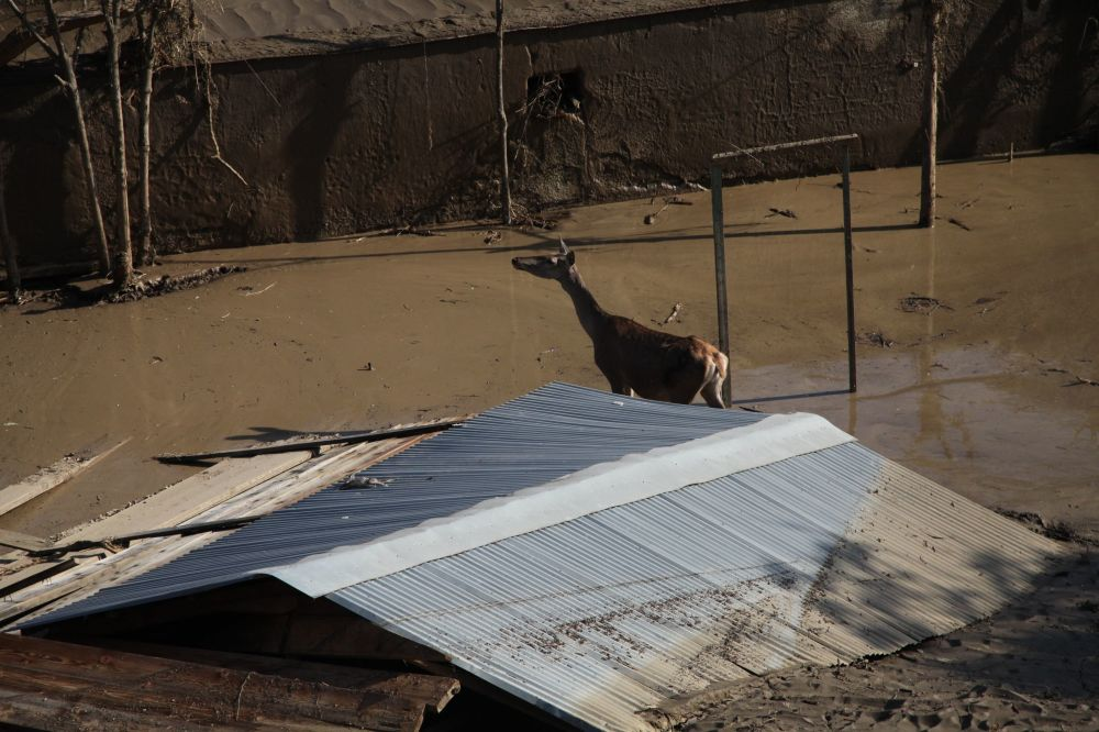 The Tragedy of Flooded Tbilisi Zoo