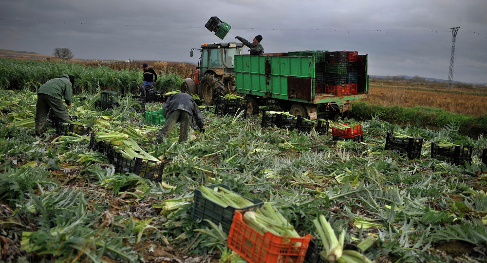 In this photo taken on Monday, Jan. 14, 2013, Tomas Jimenez, 44 year-old Spanish farmer, on the tractor, throws a plastic crate as farmers harvest winter crops, while the rain falls in the small town of Peralta, northern Spain on Tuesday, Jan. 15, 2013