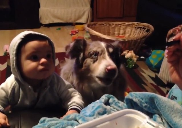 Baby can't say 'mama' but the family dog totally can