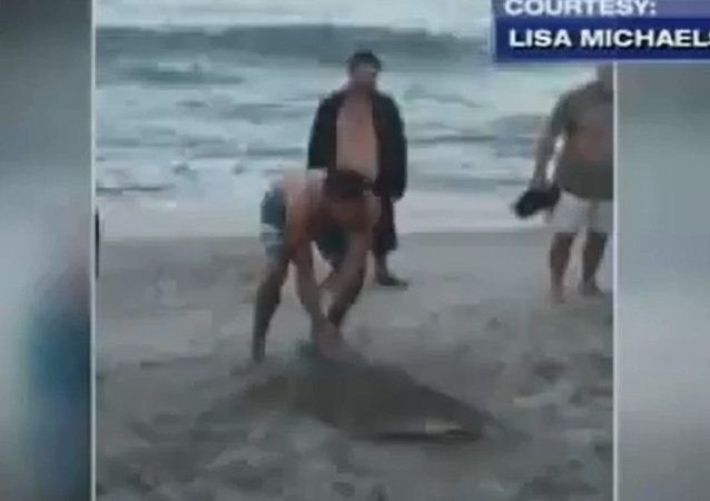 Man Drags Shark Back to Beach