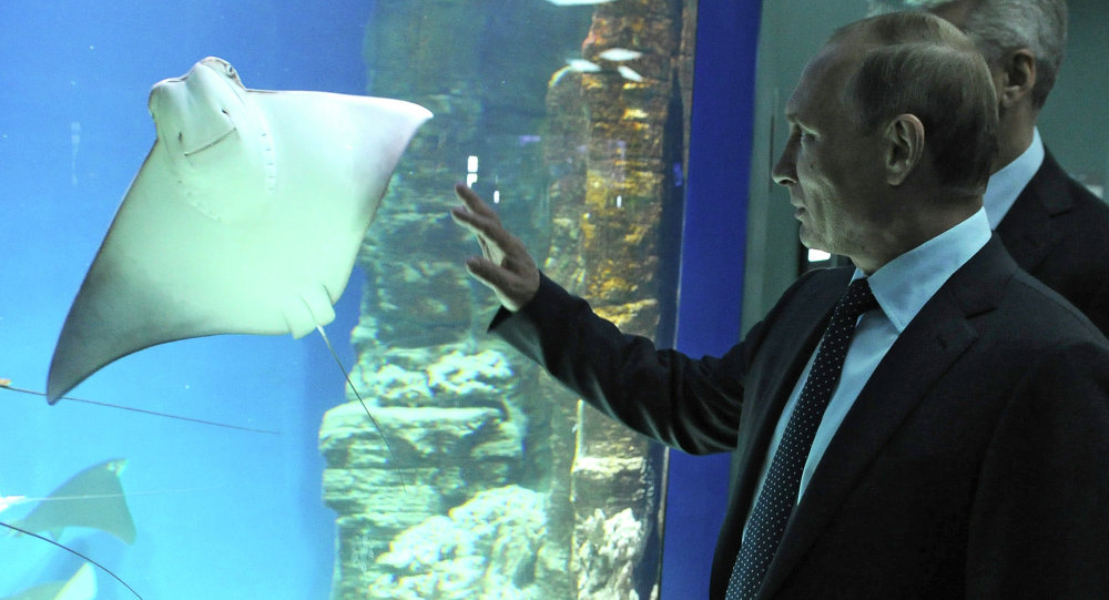 Russian President Vladimir Putin visits center of oceanography and marine biology Moskvarium