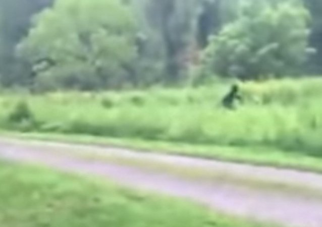 Bigfoot Discovered?
