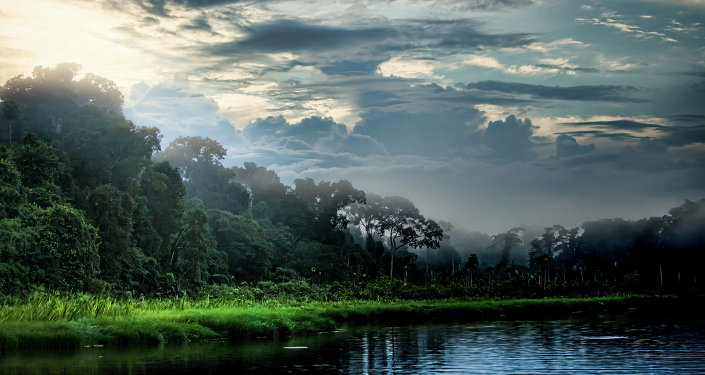 We Are Killing Earth: Numerous Amazon Tree Species at Risk of Extinction