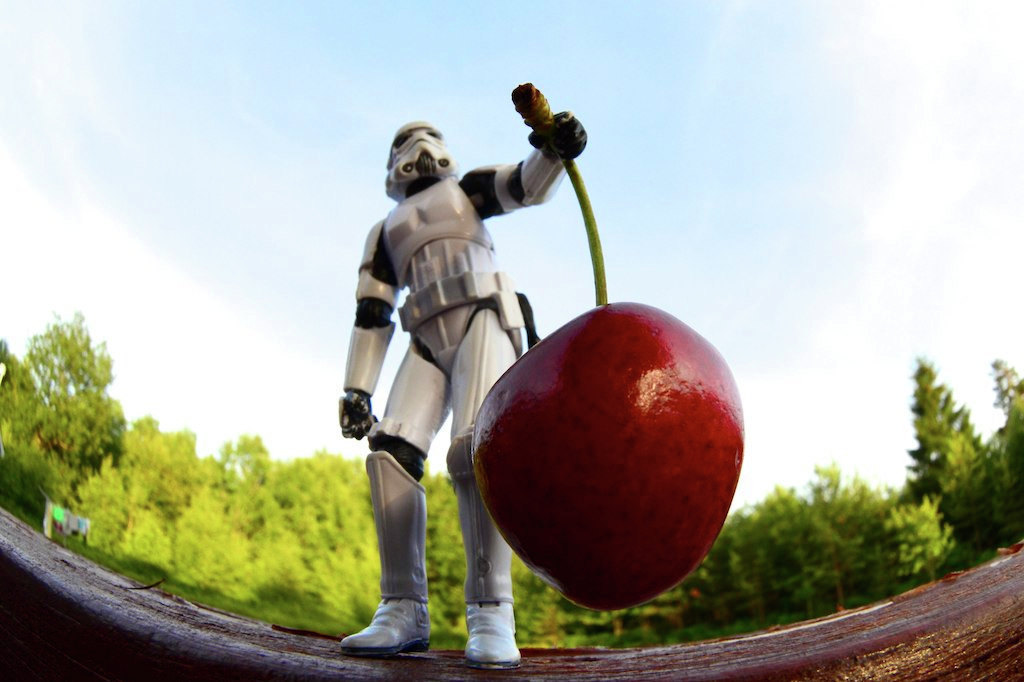 Is this cherry a (GMO) Genetically modified organism?