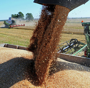 Wheat harvest in Russia's Kaliningrad Region. Exports of food now outstrip weapons, according to Gazeta.ru