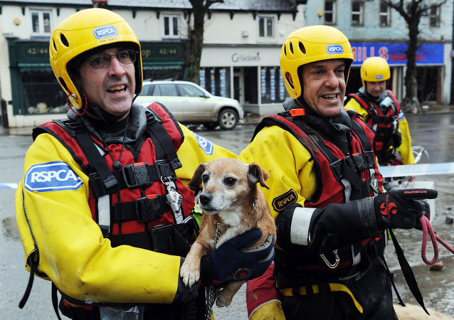 Royal Society for the Prevention of Cruely to Animals (RSPCA) Inspectors return dogs to their owners in Cockermouth, northwest England, on November 21, 2009, after being locked into the upper floors of flooded properties before their rescue