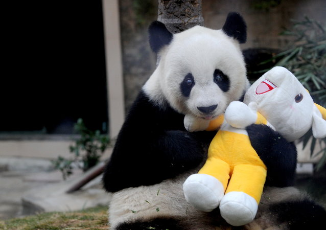 Giant panda Pan Pan holds a mascot of the 16th Asian Games, at a zoo in Fuzhou, south China's Fujian province on November 12, 2010
