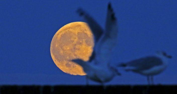 The supermoon raises behind seagulls on the beach in Evanston, Illinois, September 26, 2015.